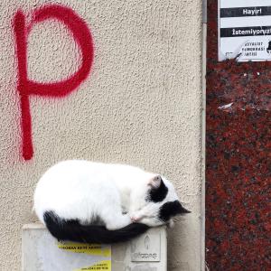 schlafende Katze in Istanbul
