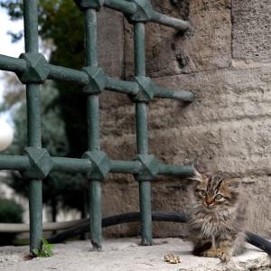 Minikatze in Istanbul