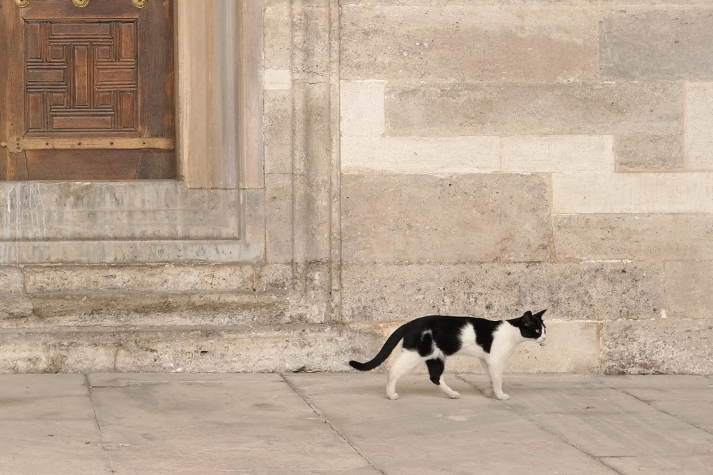 Katze in einer Moschee in Istanbul