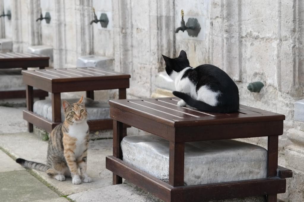 Katzen in Istanbul in der Moschee Süleymaniye
