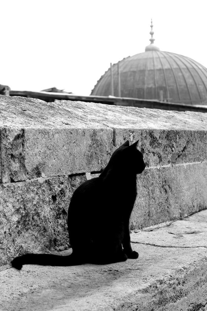 schwarze Katze in Istanbul