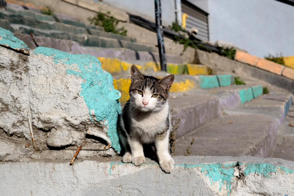 Katze in Istanbul auf der Regenbogentreppe
