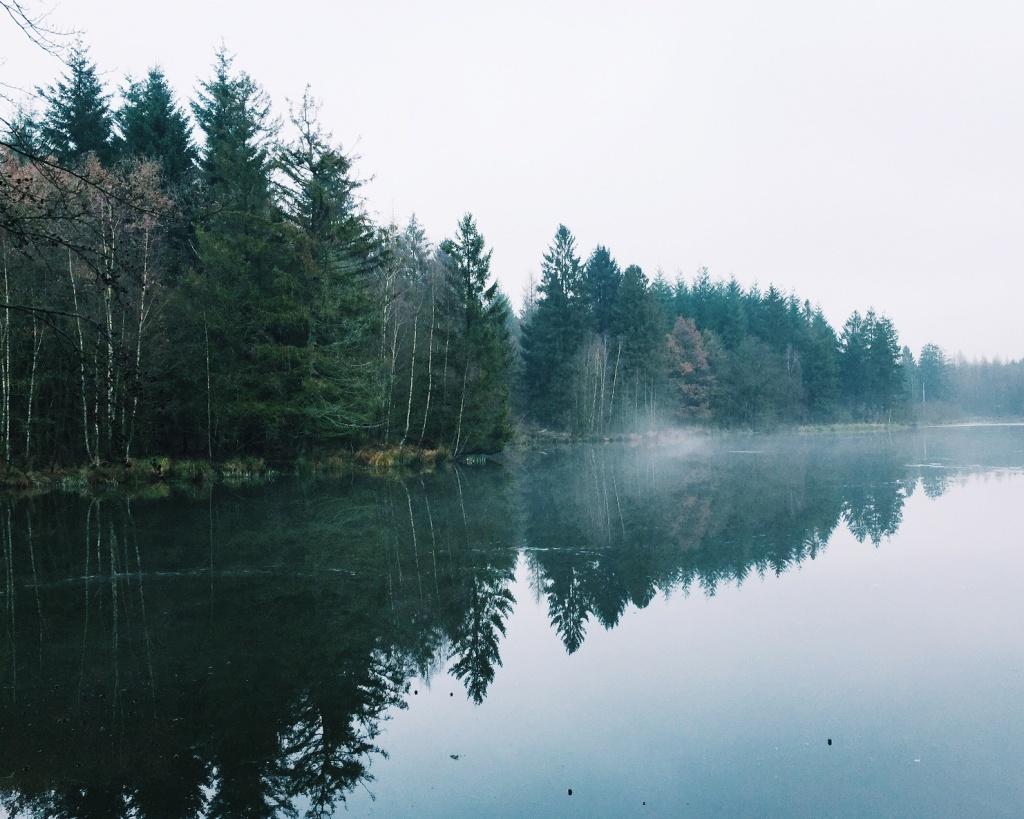 Der Nebelsee