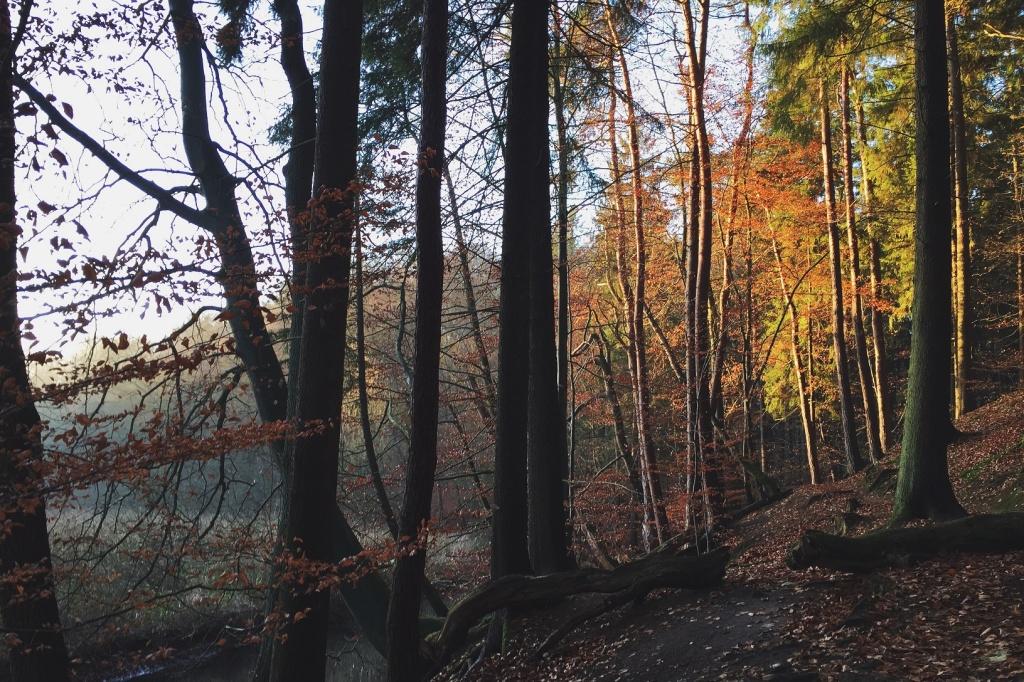 Spaziergang im Sachsenwald bei Hamburg 2
