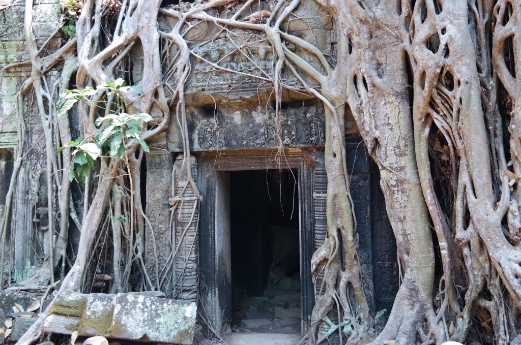 Ta Phrom Tempel Kambodscha