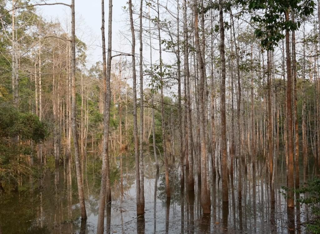 Natur rund um Angkor