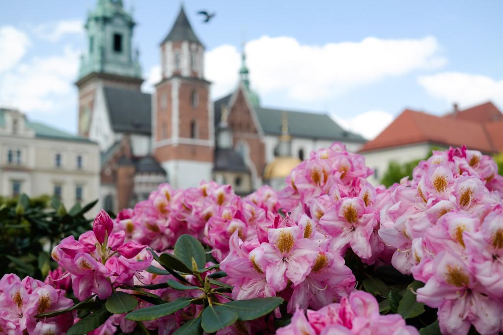 Auf dem Wawel in Krakau