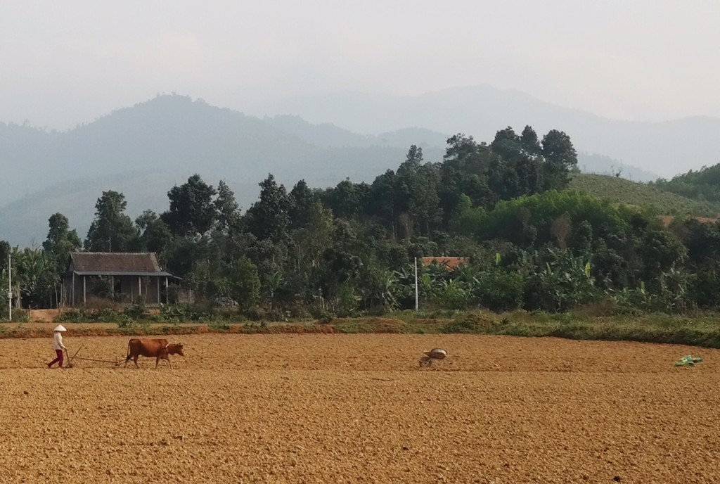 Landwirtschaft in Vietnam