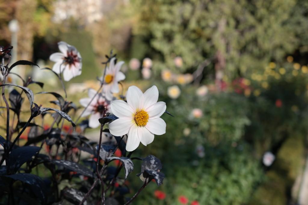 Botanischer Garten Madrid