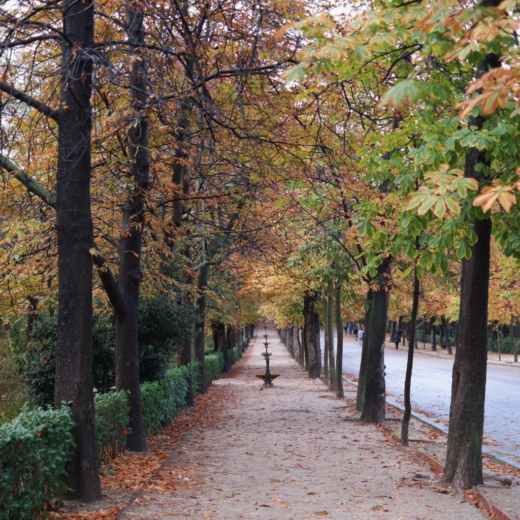 Herbst im Retiro Park Madrid