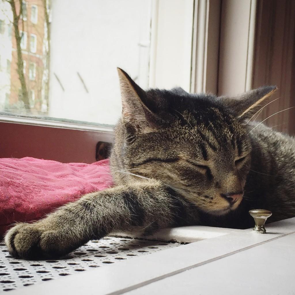 im katten kabinet