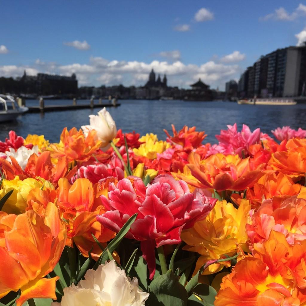 tulpenmeer in amsterdam